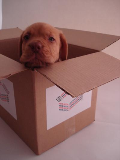 PupBox1S